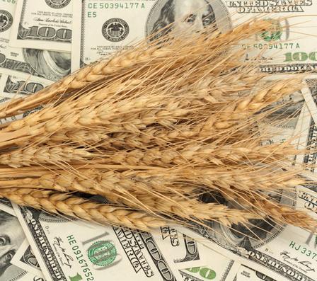 Пошлина на экспорт зерна из