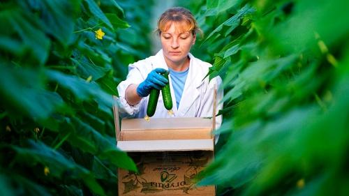 Экспорт русских  овощей увеличился в пару раз