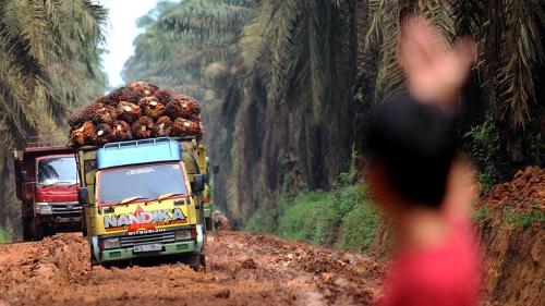 Россельхознадзор предлагает контролировать оборот пальмового масла